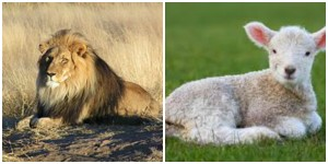 Lion or lamb, your choice.  Good luck with the lamb option.